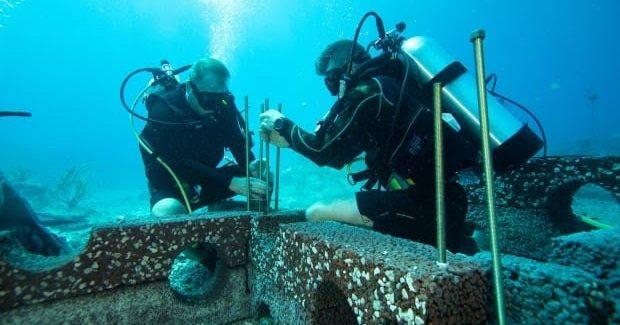 Dalhousie grad develops artificial reefs that could help save Nova Scotias ocean ecosystems